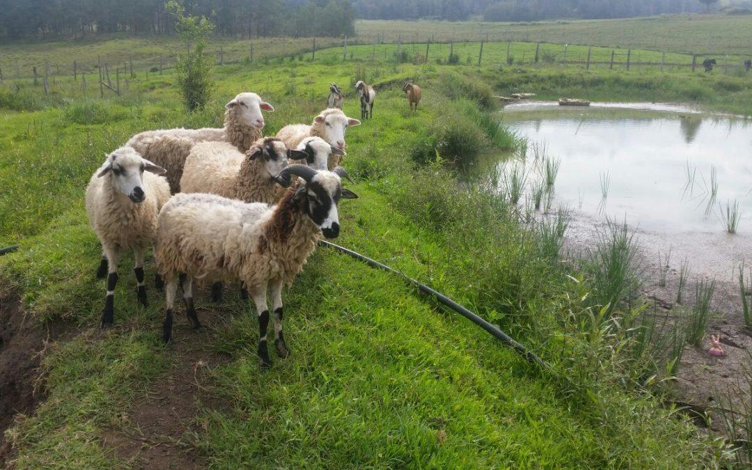 Nieuwe dieren op de farm